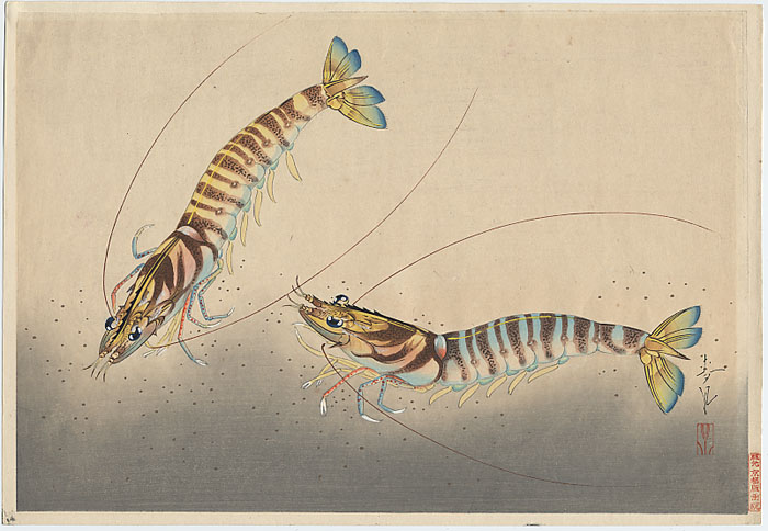 """Shrimp"" by Bakufu, Ohno"