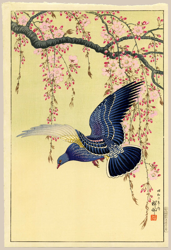 """Pigeon in Flight over Blossoming Cherry Tree"" by Shoson"